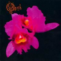 Opeth orchid